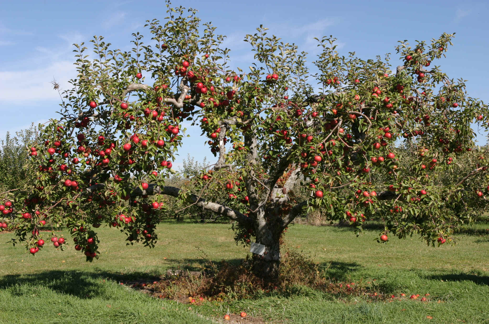 fruit-tree.jpg